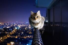 funny cat wallpapers for desktop free cute cat background hd