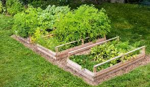 easy steps to plant a vegetable garden