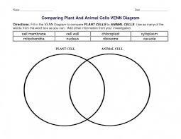 Plant Cells Vs Animal Cells Venn Diagram Plant Cells Vs Animal Cells Venn Diagram
