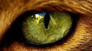 Animal Eyes Abstract Wallpapers - Top ...