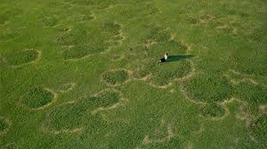 Turf Disease Turfgrass Disease Management