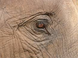 """Résultat de recherche d'images pour """"photos elephants de thailande"""""""