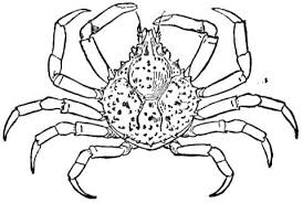 Small Picture Spider Crab coloring page Free Printable Coloring Pages