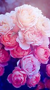 Rose wallpaper, Flower wallpaper