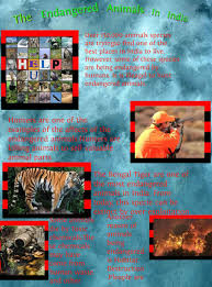 various projects to protect endangered species in essay the endangered animals in publish glogster