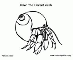 Small Picture Cartoon Clipart Of A Black And White Sly Hermit Crab Vector