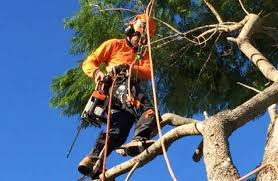 Why Should I Choose Qualified Arborists For My Next Job