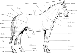 Small Picture Printable Coloring Pages Of A Horse Coloring Pages