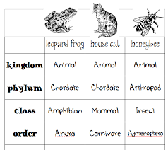 Animal Classification Chart Animal Classification Charts Skip The School