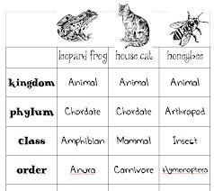 Animal Classification Charts Skip The School