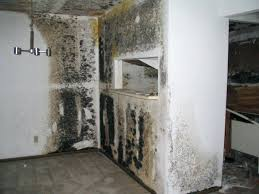 how to clean mold from walls these clean mould off exterior walls