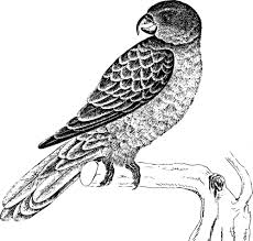 Gambar hewan burung hitam putih merupakan gambar wallpaper dan memiliki size wallpaper 640x480. Lukisan Burung Hitam Putih Cikimm Com
