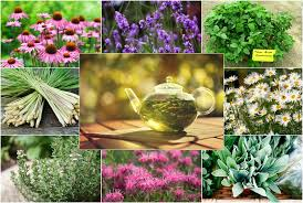 how to grow your own herbal tea garden 12 herbs to get your started
