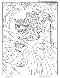 Leopard Jungle Colouring Pages Page 2 Coloring Pages Jungle