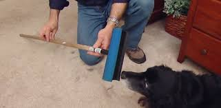 window squeegee and dog on carpet