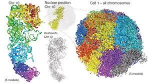 Темы для курсовых и дипломных работ Сополимеры и структура  Определение механизмов упаковки молекул ДНК контурной длиной до двух метров в ядро живой клетки размером около десятка микрон это одна из самых ярких и
