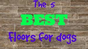 best flooring for pets. Best Hardwood Floors For Pets Flooring Fantasy Marvelous That Have Accidents At What E