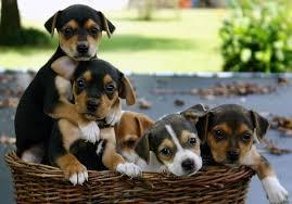 Resultado de imagem para imagens de cães a brincar