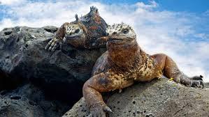 Resultado de imagem para imagenes de islas galapagos