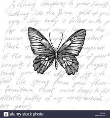 Butterflies silhouettes. Butterfly ...