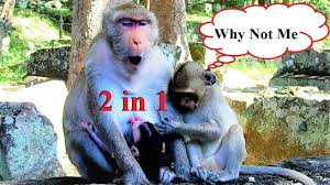 OMG..OMG! Janet So Jeasous with Janna got 2 In 1 Milk at The Same Time,W...  | 2 in, Angkor, Milk