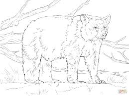 Small Picture Realistic American Black Bear coloring page Free Printable