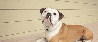 dogs that don t shed keep your house