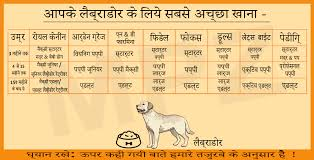 Dog Food Chart By Weight Diet Food Chart For Weight Loss In Hindi Www