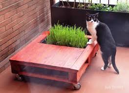diy coffee pallet coffee table with cat garden image kinoette com