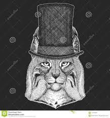 одичалый кот рысь бойскаут младшей группы шляпа руки трота