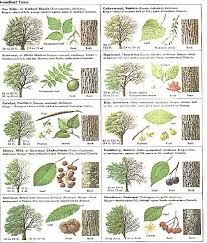 Identify Trees With Pictures I Like That This Includes