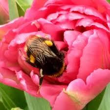 <b>Owl</b> Garden <b>Flowers</b>