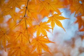 「秋  無料素材」の画像検索結果