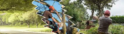 Qualities Of The Best Tree Removal Services Provider - Forest Tree Removal