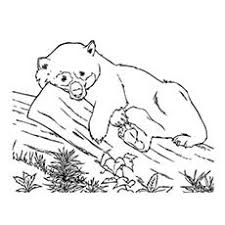 Small Picture Top 25 Free Printable Cute Panda Bear Coloring Pages Online