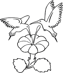 Small Picture Hummingbird Coloring Page 4425