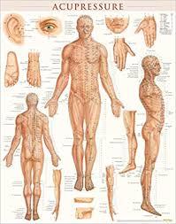 Acupressure Laminated 9781423222651 Medicine Health