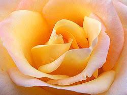 Image result for flores para amigos de arte y poesia