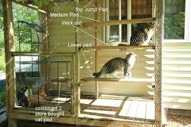 outdoor cat playground enclosed