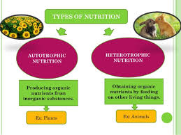 Biology Champ Photosynthesis Autotrophic Nutrition
