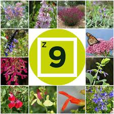 Small Picture Plants for Getting Started Salvia Gardening in Zone 9