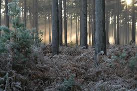 Image result for RENDLESHAM FOREST