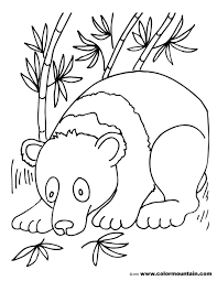 Color Panda Bear Coloring Pages New