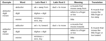 Latin Roots Chart Naming Skeletal Muscles Anatomy And Physiology