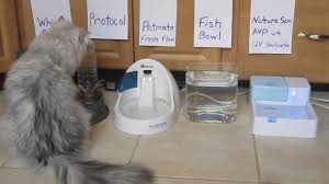 automatic cat water fountain fancy ideas 18 persian bowl testing automatic water bowl for cats a46