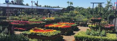 flamingo road nursery