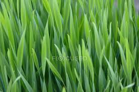 Grass blades Stock Photos Royalty Free Images Focused