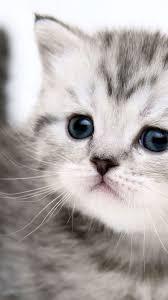 Cat iPhone Wallpapers - Top Free Cat ...