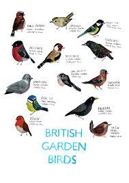 British Garden Birds Chart Pin On My Art