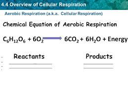 6 aerobic respiration a k a cellular respiration chemical equation of aerobic respiration c6h12o6 6o co2 6h2o energy reactants s
